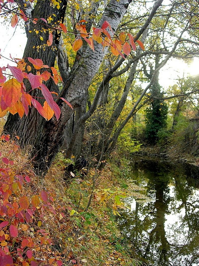 Під Севастополем ще цвіте осінь. Фото: Алла Лавриненко/Велика Епоха