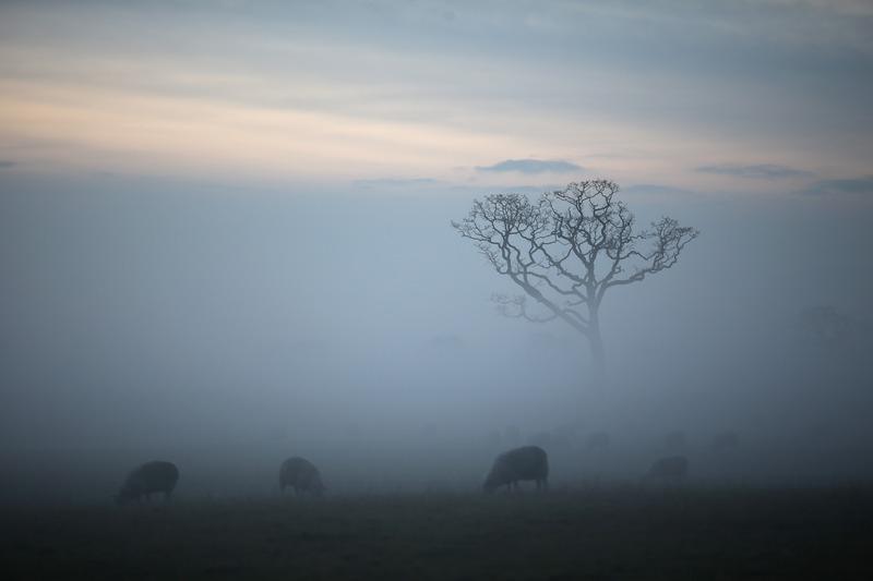 Нортвич, Англия, 18 декабря. Сильный туман опустился на территорию графства Чешир. Фото: Christopher Furlong/Getty Images