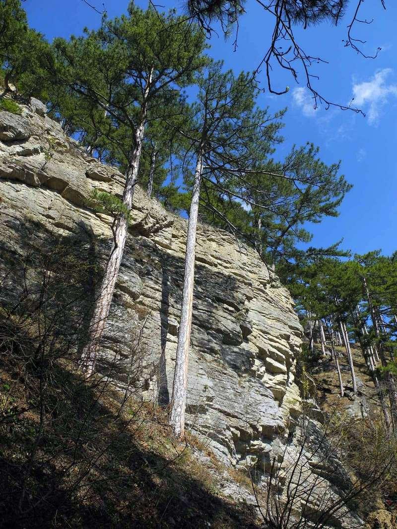 Сосни на схилах уздовж доріжки до водоспаду. Фото: Алла Лавриненко/EpochTimes.com.ua
