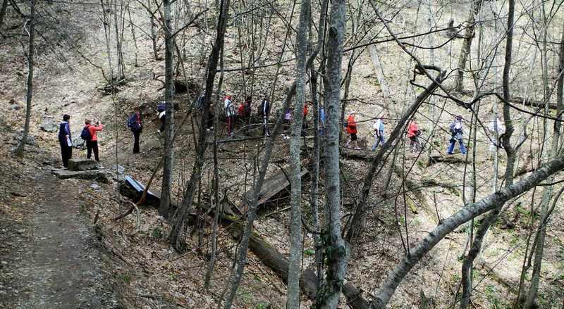 Стежка петляє в листяному лісі. Фото: Алла Лавриненко/EpochTimes.com.ua