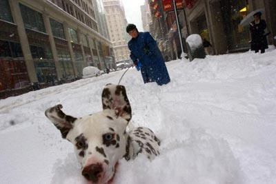 """Мег Калі зі штату Вашингтон дозволила насолодитися своєму песику """"Бінді"""" першим снігом у його житті. Мег відвідує цю виставку з 1980 року. Сім років тому вона почала брати участь у цій виставці зі своїми собаками. Фото: Michael Brown/Getty Images"""