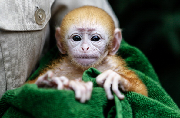 Фото: Putu Sayoga/Getty Images