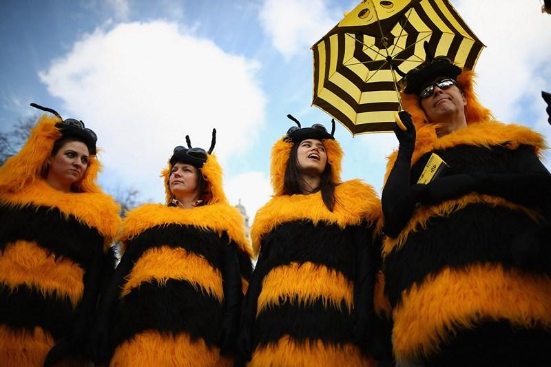 Лондон, Англия, 26 апреля. Группа поддержки пчеловодов, наряженных в мохнатые костюмы, протестует на Парламентской площади против использования пестицидов, уничтожающих популяцию пчёл. Фото: Dan Kitwood/Getty Images