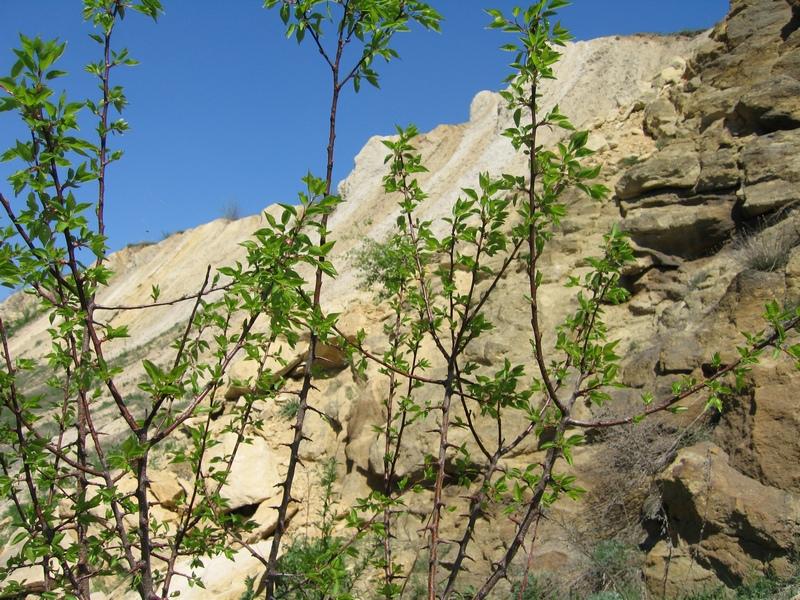 Сьоме чудо України: Каньйон в Олексієво-Дружківці, Донецької області, де збереглися скам'янілі дерева віком 250 млн років. Фото: Мілостнова Росіна/The Epoch Times Україна