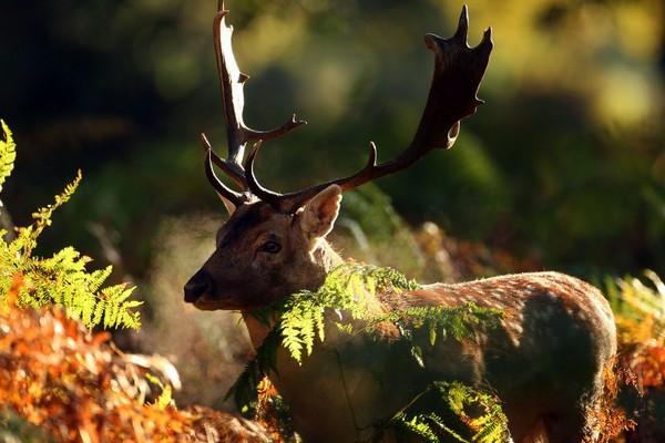 Золота осінь в Англії. Фото: Getty Images