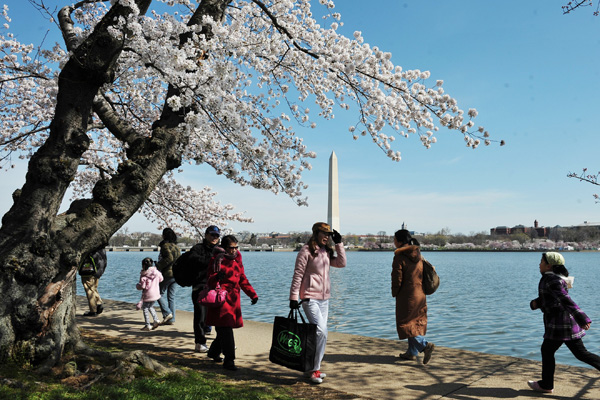Фестиваль цветения вишни в Вашингтоне. Фото: MANDEL NGAN/AFP/Getty Images