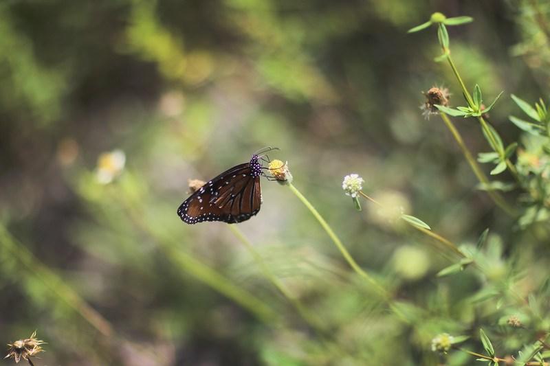 Бабочка. Национальный парк Эверглейдс, Флорида. Фото: Joe Raedle/Getty Images