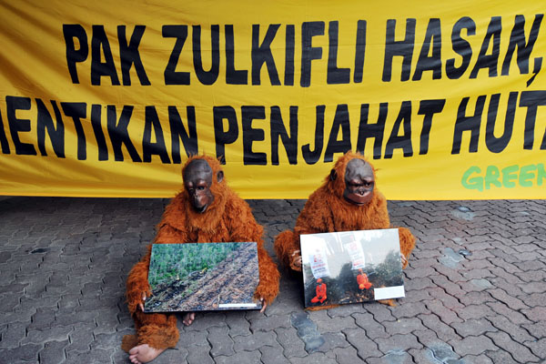 Два активиста из Гринписа одеты в костюмы орангутангов. Они призывают министра лесного хозяйства прекратить вырубку леса. Джакарта, Индонезия. Фото: ADEK BERRY/AFP/Getty Images