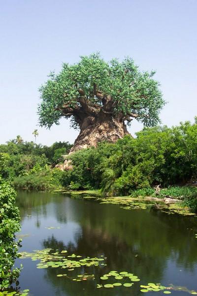 Жизнь уникального дерева. Фото с secretchina.com