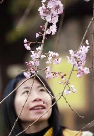 В Токио зацвела сакура. Фото:  YOSHIKAZU TSUNO/AFP/Getty Images
