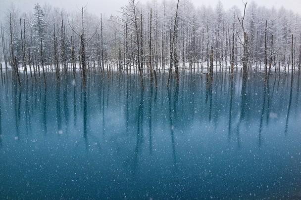 Необычное явление — снег в мае, падающий на поверхность голубого пруда. Хоккайдо, Япония. Фото: Kent Shiraishi/travel.nationalgeographic.com