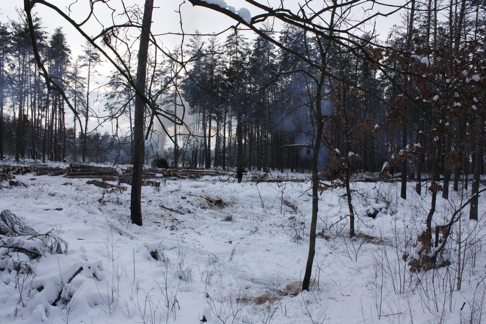 Ділянка лісу, яка вирубується зараз. Фото: The Epoch Times Україна