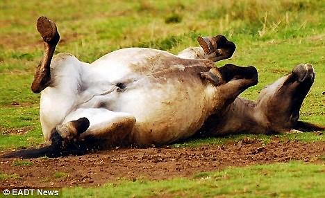 Коня іржуть і ...сміються. Фото з secretchina.com