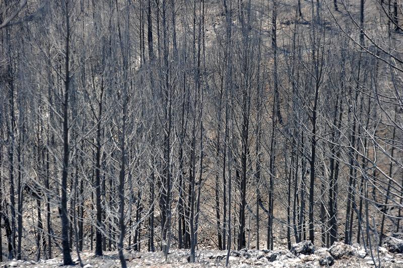 Боаделла, Испания, 25 июля. Каталонию охватили лесные пожары. Фото: LLUIS GENE/AFP/GettyImages