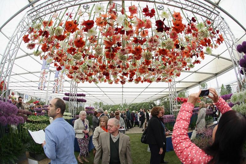 Гиппеаструмы в Большом павильоне на выставке цветов в Челси. Фото: Oli Scarff/Getty Images