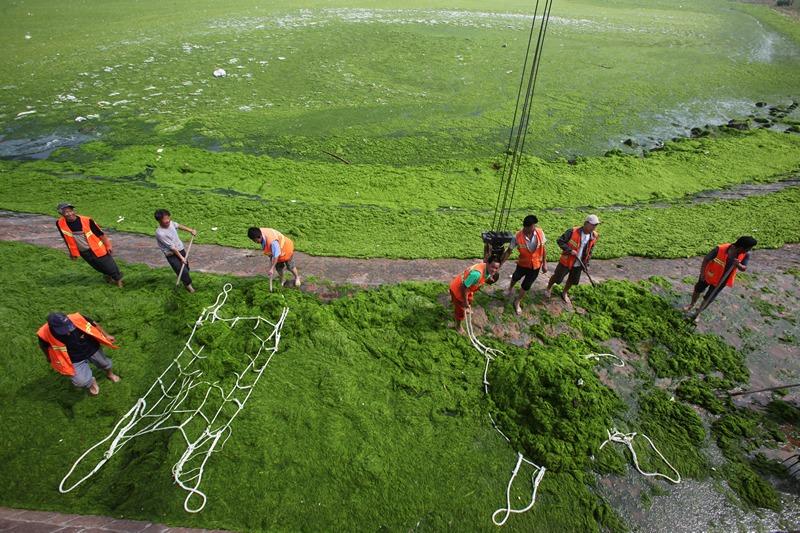 Циндао, Китай, 30 июня. Рабочие очищают пляж от зелёных водорослей. Фото: ChinaFotoPress/ChinaFotoPress via Getty Images