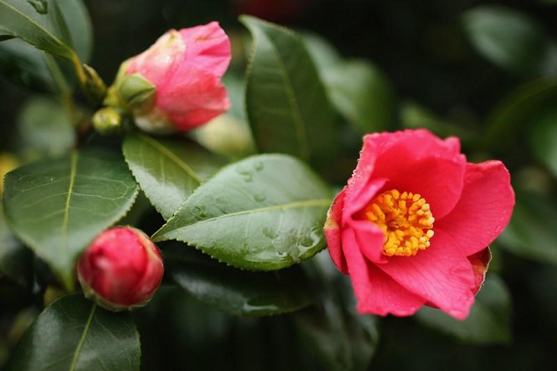 Весна в ботанічному саду Кью. Фото: Dan Kitwood/Getty Images