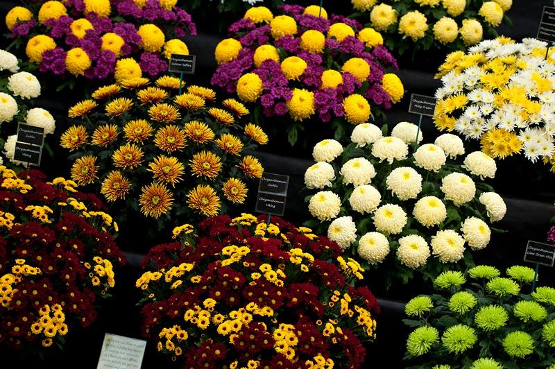На виставці квітів у Челсі. Фото: Ben A. Pruchnie/Getty Images