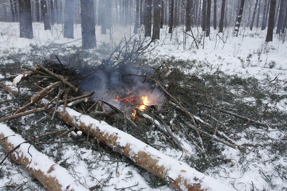 Под Киевом вырубают большой участок леса. Фото: The Epoch Times Украина