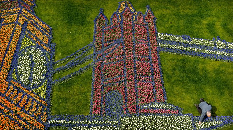 Ліссе, південна Голландія, 2 травня. Зображення Біг-Бена і Тауерського моста викладені квітами в королівському саду Кекенхоф. Тема квіткового оформлення в цьому році — Великобританія. Фото: Koen van Weel/AFP/Getty Images