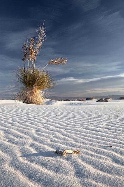 Вечнозелёное растение юкка в заповеднике «Белые пески», штат Нью-Мексико. Фото: Jeanne Frasse/outdoorphotographer.com