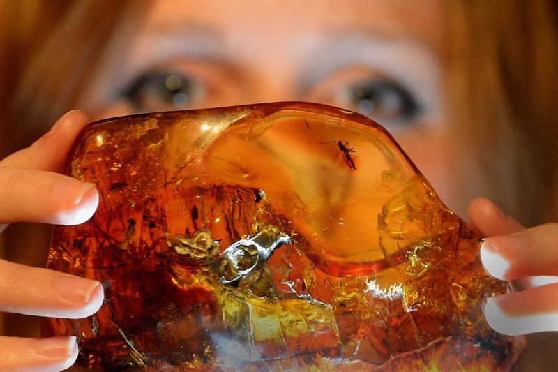 Эдинбург, Шотландия, 9 мая. Сотрудница Национального музея держит в руках кусок мексиканского янтаря возрастом около 20 млн лет, представленный на выставке «Удивительный мир янтаря». Фото: Jeff J Mitchell/Getty Images