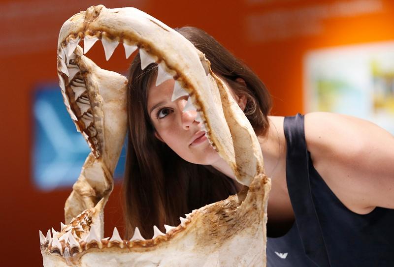 Монако, 7 червня. Відвідувачка виставки «Акули» в музеї океанографії розглядає щелепу акули. Виставка проводиться напередодні Всесвітнього дня океанів. Фото: VALERY HACHE/AFP/Getty Images