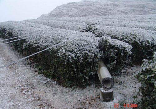 Во многих районах Китая от сильной непогоды повреждены  лини электропередач. Фото с epochtimes.com