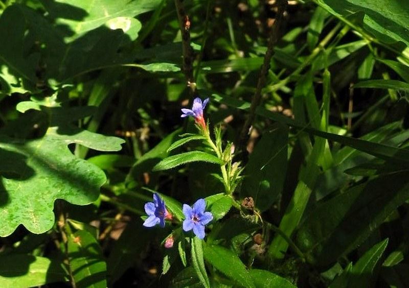 Вологолюбні квіти. Фото: Алла Лавриненко / EpochTimes.com.ua