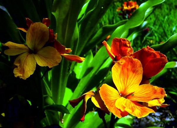 Питомник «Первоцвет», Крым. Фото: Алла Лавриненко/Великая Эпоха