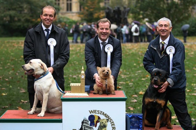 Лондон, Англия, 25 октября. Тройка победителей конкурса «Собака года Вестминстера»: терьер Норфолк (1 место), лабрадор Чолмли (2 место), ротвейлер Гордон (3 место). Фото: Jordan Mansfield/Getty Images