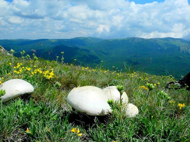 Горный белый гриб, Чатыр-Даг. Фото: Алла Лавриненко/Великая Эпоха