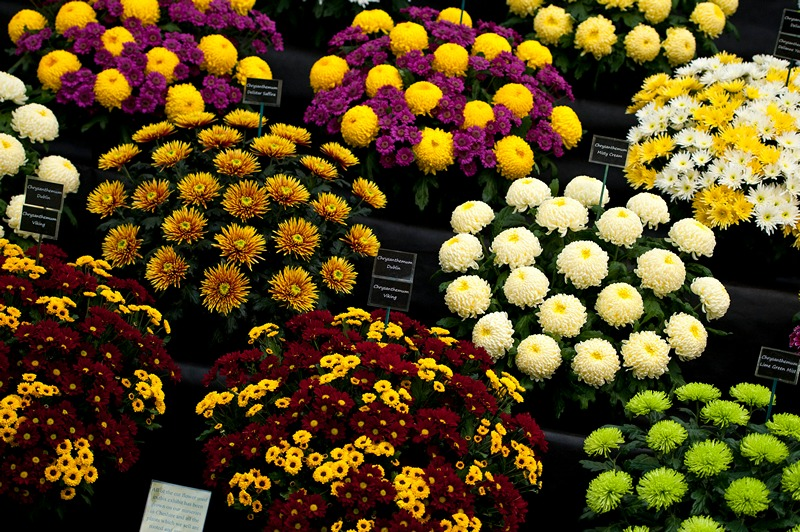 На выставке цветов в Челси. Фото: Ben A. Pruchnie/Getty Images