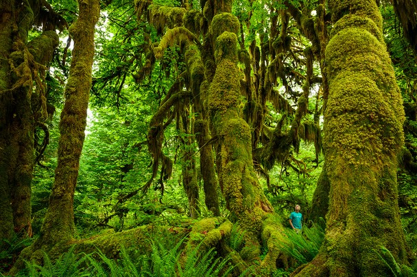Прогулка в дождевом лесу. Национальный парк Олимпик, США. Фото: Scott Sady/travel.nationalgeographic.com