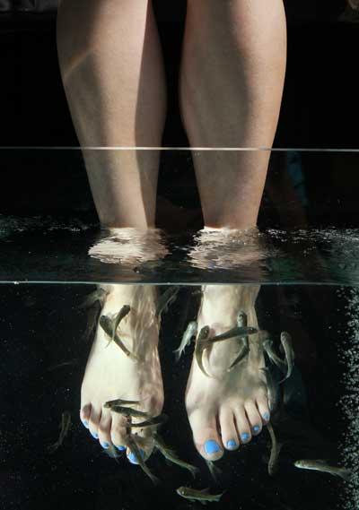 Рибки Гаррі Руфа (Garra Rufa). Фото: Peter Macdiarmid / Getty Images