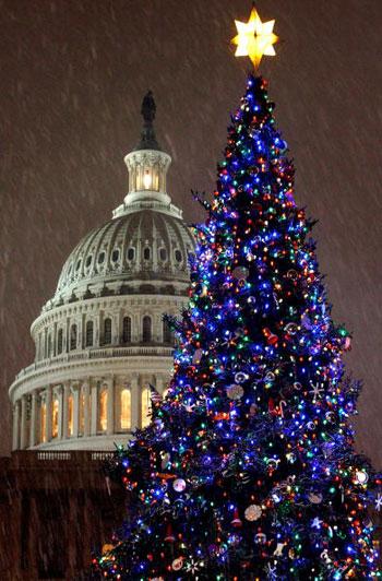 Рождественская ёлка в Вашингтоне. Фото: Chip Somodevilla/Getty Images