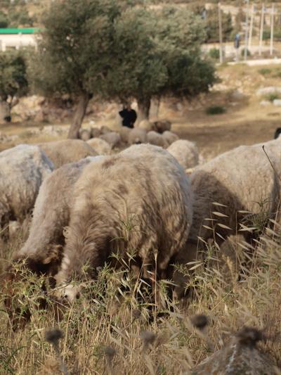 Иерусалимские зарисовки. Фото: Хава ТОР/The Epoch Times