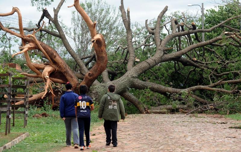 Пригород Асунсьона, Парагвай, 19 сентября. Поваленное сильным штормовым ветром дерево перегородило дорогу. Фото: NORBERTO DUARTE/AFP/GettyImages