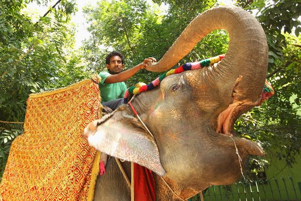 Здесь слоны и рикши находят место рядом с роскошными дворцами и небоскребами. Фото: Mark Kolbe/Getty Images