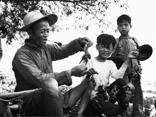 Кампания по уничтожению воробьёв, во время которой по всему Китаю было уничтожено около 2 млрд птиц. Фото с aboluowang.com