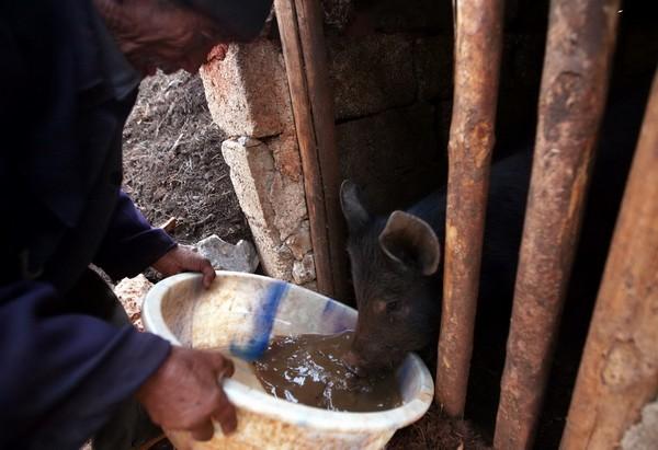 После стирки, вода становится загустевшей, и её отдают свинье. Фото с aboluowang.com