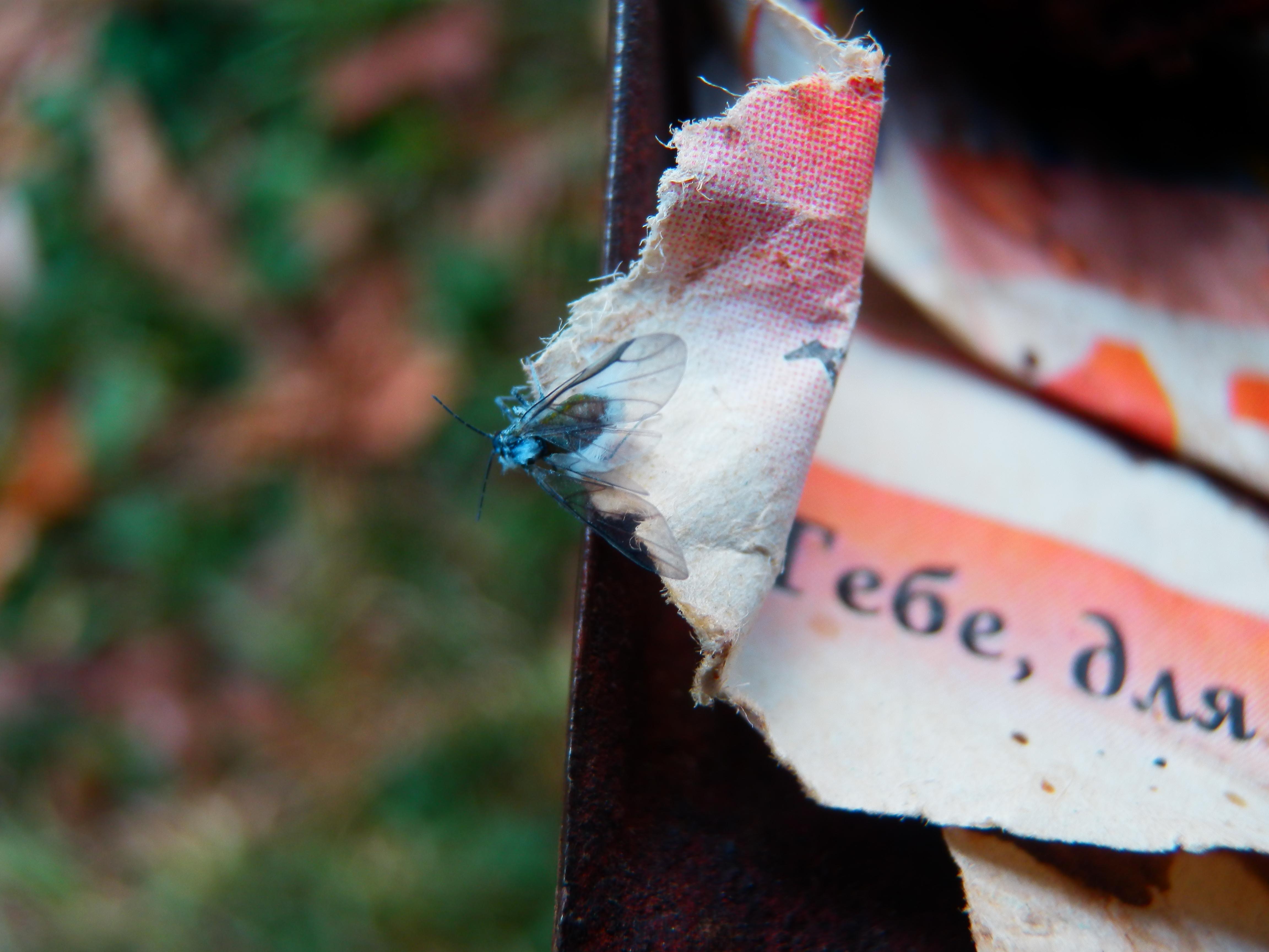 Восени вже можна й роздивитися — чи то звична тля ще Попелиця ця?