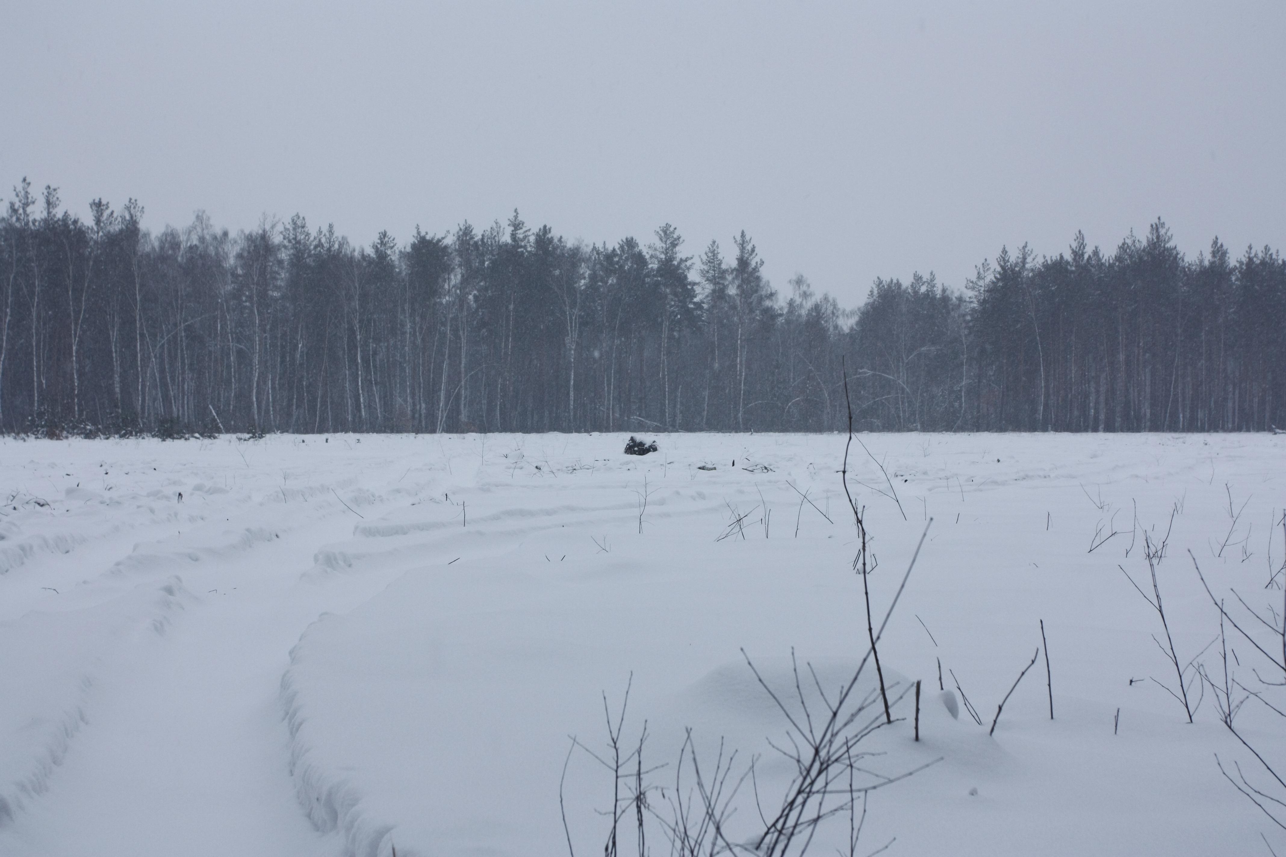Ділянка лісу, яка була вирублена з листопада по грудень 2011 року. Фото: The Epoch Times Україна