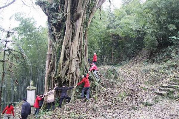 Тысячелетнее баньяновое дерево. Провинция Сычуань. Фото с epochtimes.com