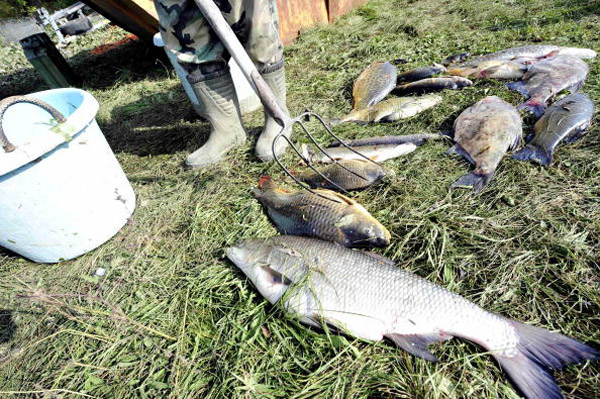 Рибалки з мертвою рибою на березі р. Маркал, 140 км від Будапешта.Фото: ATTILA KISBENEDEK/AFP/Getty Images
