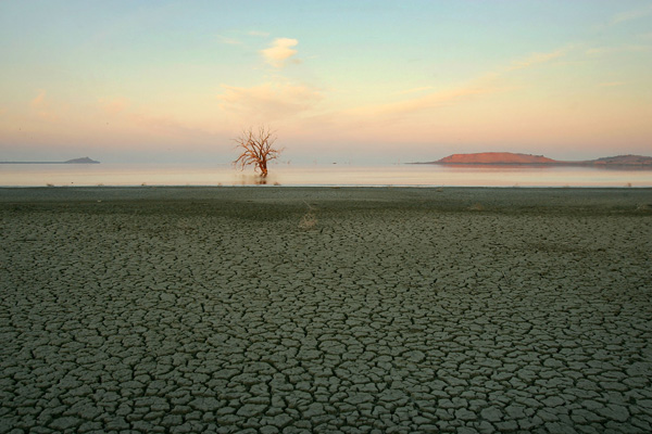 Пустынная жара стала причиной повышения концентрации соли в море Салтон, химические удобрения, принесенные водами с плантаций, стали источником пищи для сине-зеленых водорослей. Фото: David McNew/Getty Images