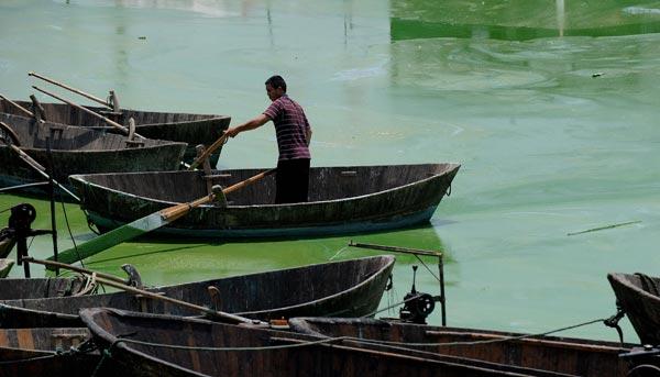 Озеро Чаоху в Хэфэй, центральной провинции Китая Аньхой, покрылось цветущими зелеными водорослями. Фото: AFP/Getty Images