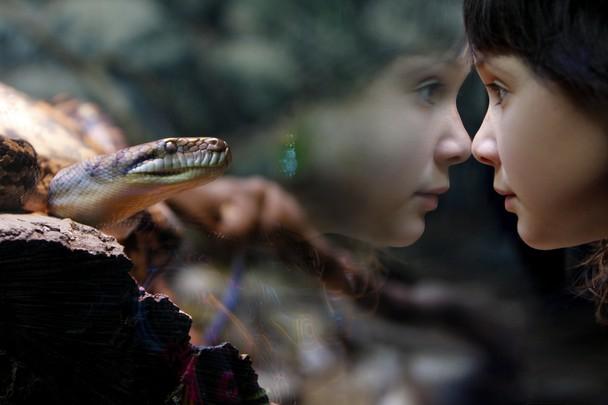 Взгляд. Зоопарк Стива Ирвина, Квинсленд, Австралия. Фото: Elaine Barker/travel.nationalgeographic.com