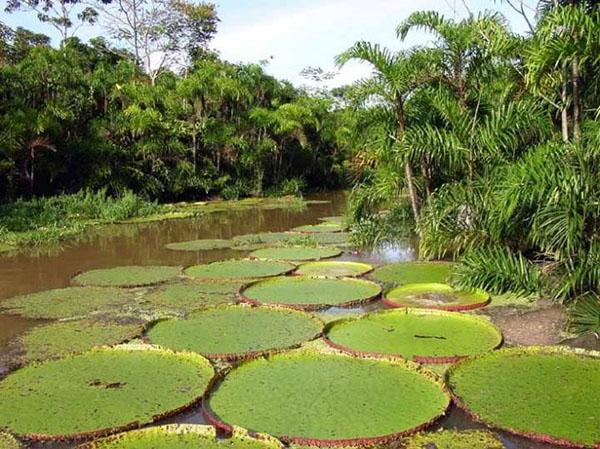Річка Амазонка. Фото: foto-prikol.net