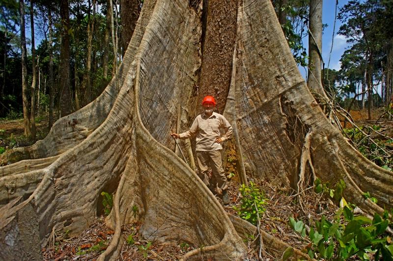 Природа Екваторіальної Гвінеї. Фото: Олександр Африканець